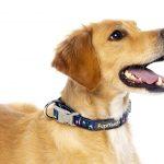 FZCL54-6_Collar_Neo_NoProbllama_Dog_2
