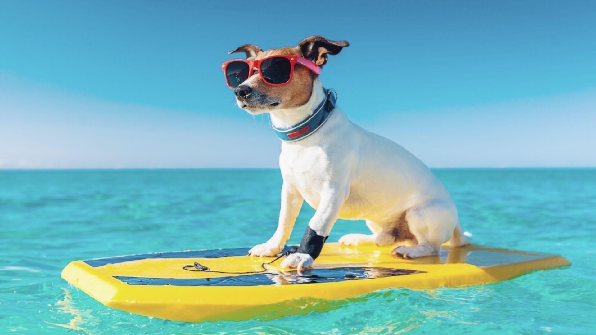 οδηγος για ενα ξενοιαστο καλοκαιρι με το σκυλο σου