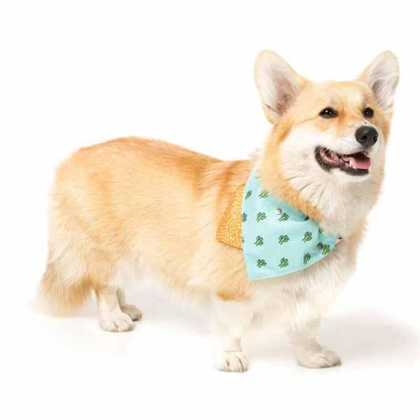 tucson-μπαντανα-σκυλου-αξεσουαρ-βολτα