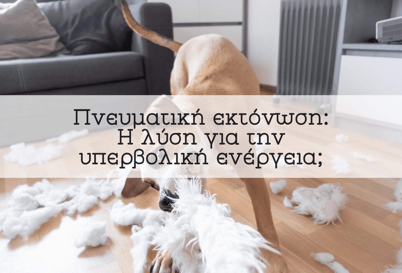 εκπαιδευση σκυλου-εκτονωση-blog-κατοικιδια